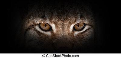 Lynx portrait on a black background