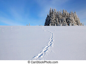Lynx tracks in the snow
