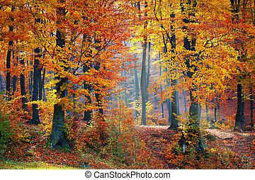 lys stråle, igennem, den, træer