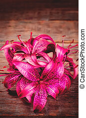 lyserød blomstrer, lilia