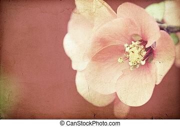 lyserød blomstrer, på, vinhøst, baggrund