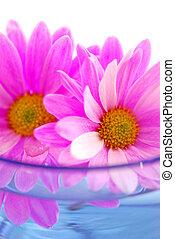 lyserød blomstrer