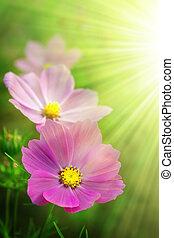lyserød, forår