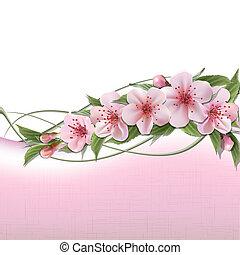 lyserød, forår blomstrer, baggrund, kirsebær