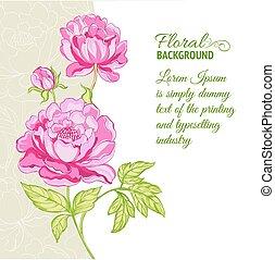 lyserød, peonies, udsnit, baggrund, tekst