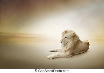 lyxvara, foto, av, vit, lejon