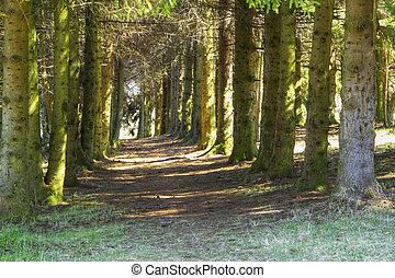 mágico, bosque