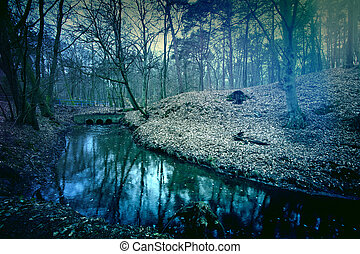 mágico, oscuridad, y, misterioso, forest.