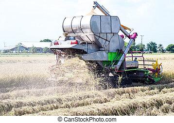 máquina segador de cosechadora, cosechar, arroz