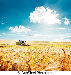 máquina segador de cosechadora, en, un, trigo, field., agriculture.