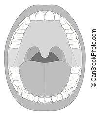 mâchoire, bouche, contour, dents
