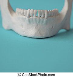 mâchoire, de, a, man., les, concept, de, les, santé dentaire, soin, de, dents