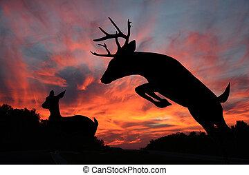 mâle, cerf, biche, queue, coucher soleil, blanc, n