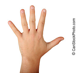 mâle, cinq, doigts, main
