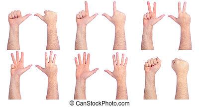 mâle, dénombrement, mains