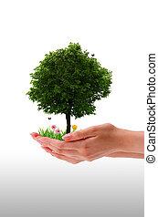 mão, árvore, -
