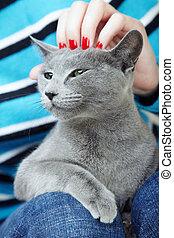 mão, afagar, human, gato