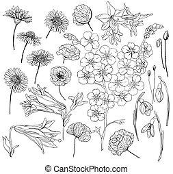 mão, desenhado, flores
