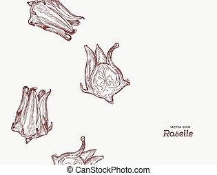 mão, desenhado, ilustração, roselle, flower.