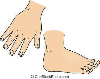 mão, e, pé, partes corpo