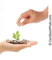 mão, e, planta verde, crescendo, de, a, moedas