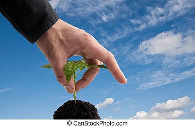 mão, em, negócio, camisa, colheita, um, planta jovem