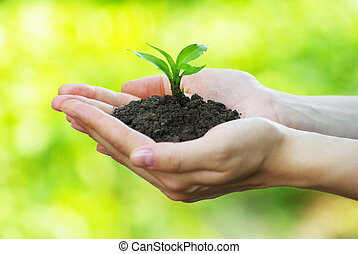 mão, planta