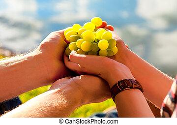 mão, uvas brancas, luz solar
