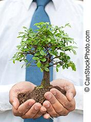 mãos, árvore, homem negócios