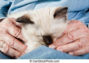 mãos, antigas, segurando, gatinho