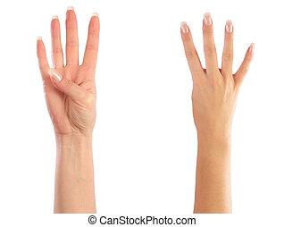 mãos, contagem, 4, femininas, número