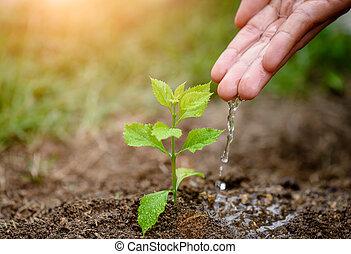 mãos, dar, água, para, um, jovem, árvore, para, planting.