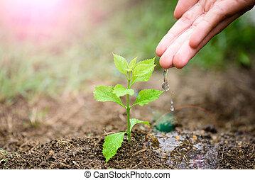 mãos, dar, água, para, um, jovem, árvore, para, planting., dia terra, concept.