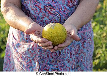 mãos, de, a, mulher idosa, ter, um, maduro, melão