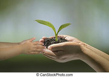 mãos, de, um, criança, levando, um, planta
