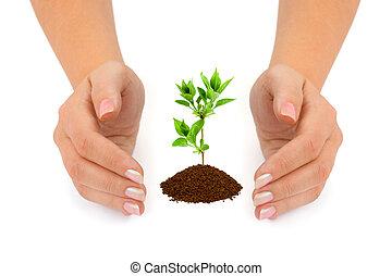 mãos, e, planta
