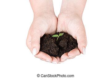 mãos humanas, segurando, planta