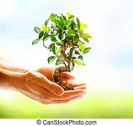 mãos humanas, segurando, planta verde, sobre, natureza, fundo