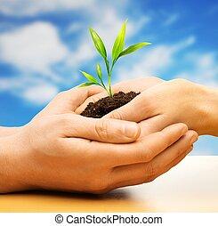 mãos humanas, segurando, terra, com, planta, broto, contra, céu azul