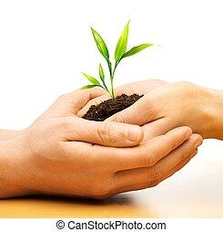 mãos humanas, segurando, terra, com, planta, broto