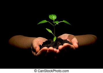 mãos, planta