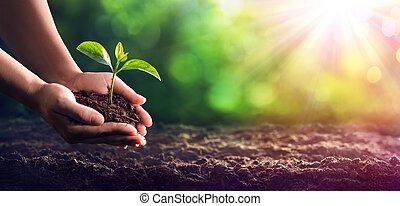 mãos, plantar, a, seedlings, em, a, chão