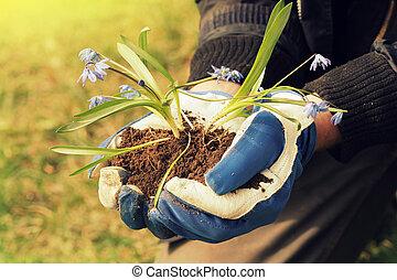 mãos, segurando, seedling, flor