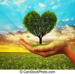 mãos, segurando, um, árvore, em, a, forma, de, coração