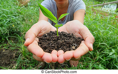 mãos, segure, um, pequeno, planta verde