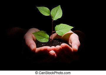 mãos, solo, e, planta, mostrando, crescimento