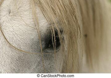 mähne, auge, pferd