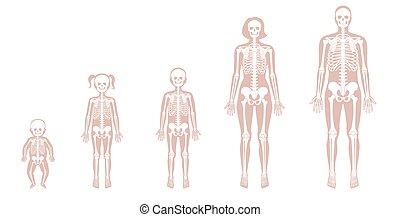 mänsklig, åldern, skelett, olik
