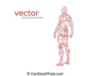 mänsklig, illustration, vektor, kropp