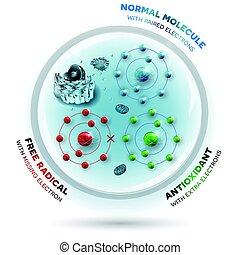 mänsklig, normal, gratis, andtioxidant, cell, radikal, molekylen